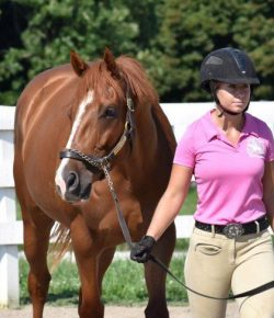 4 Questions to Ask Before Retraining Your OTTB