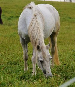 The More You Know: Protect Your Horse From Poisonous Plants