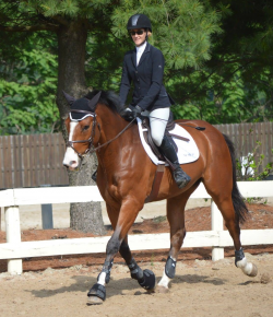 Best of JN: How To Make Horse Shows Better