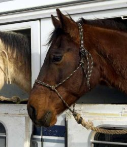 Kentucky Performance Products: Keeping Horses Healthy While Traveling