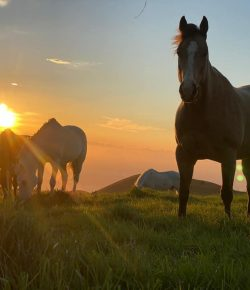 Reader Photo Challenge: Green Pastures