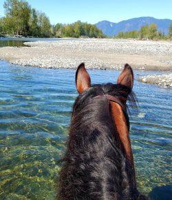 Reader Photo Challenge: Trail Snapshots
