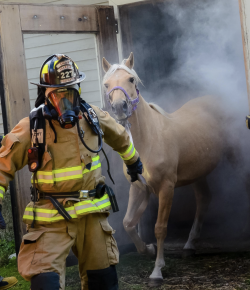 Weekend Wellness: Equine Guelph Offers New Industry Certificate
