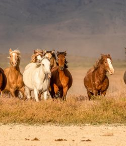 New Federal Policies Land America's Wild Horses and Burros in the Slaughterhouse