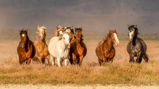 American Wild Horse Coalition Calls on Biden's Interior Dept. to Freeze Cattle Grazing Permits, Protect Wild Horses