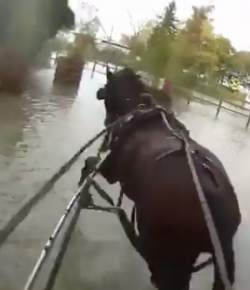 Ecovet Presents Mind Your Melon: Carriage Driving