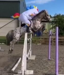 Kentucky Performance Products Tuesday Video: Unicorn Alert