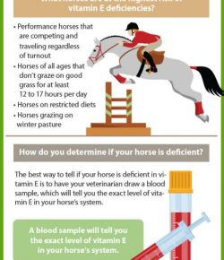 Kentucky Performance Products: Vitamin E Deficiency in Horses