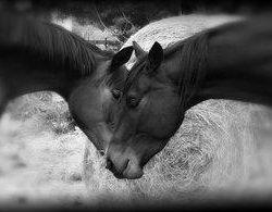 Reader Photo Challenge: Equine Siblings
