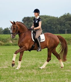 What Does Horsemanship Mean?