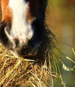 Best of JN: Finding a Nutrition Plan That Works for Your Horse