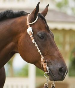 Kentucky Performance Products: How Much Selenium Is in Your Horse's Diet?