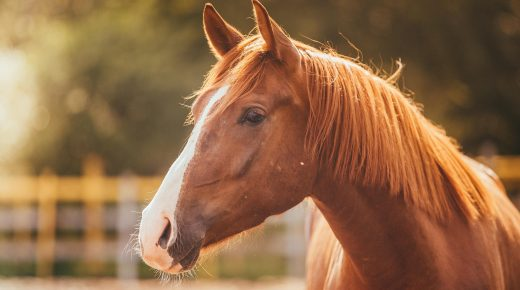 Safe Horse Transport Legislation Headed To Full House for a Vote