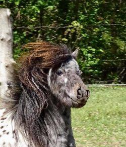 Reader Photo Challenge: Barn Hair Don't Care