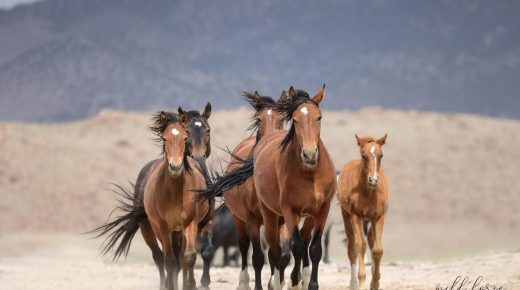 Op-Ed: The Horse Transport for Slaughter Amendment to Infrastructure Bill
