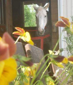 Reader Photo Challenge: Signs of Summer