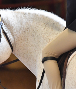 Horse & Country Launches H&C+ on Xfinity X1 and Flex in the U.S.