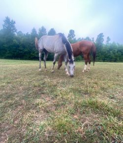 Horsemanship & Feel: Kate & Luis