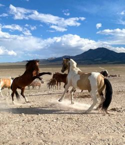 Hope for Iconic American Equines on the Horizon