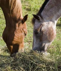 Kentucky Performance Products: The Key to Healthier Horses