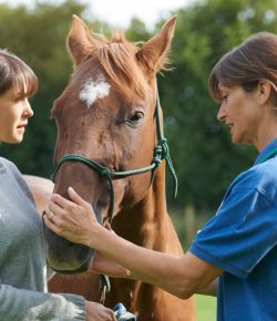 SmartPak Monday Morning Feed: When to Call the Vet