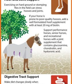 Kentucky Performance Products: Feeding Horses in Drought Conditions