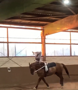 Kentucky Performance Products Tuesday Video: Vaulting Bloopers