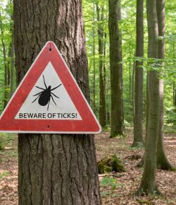 Kentucky Performance Products: What To Do About Ticks