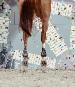 Today in Tokyo: Sweden Soars, USA Advances in Team Jumping Qualifier
