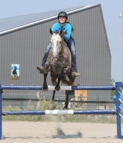 Self-Regulation in Horses: Is Your Horse Ready to Learn?