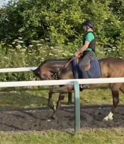 Ecovet Presents Mind Your Melon: This Horse Has Got Talent