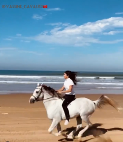 Kentucky Performance Products Tuesday Video: Beach Rides