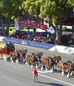 Equestrians Selected for 2022 Rose Parade®