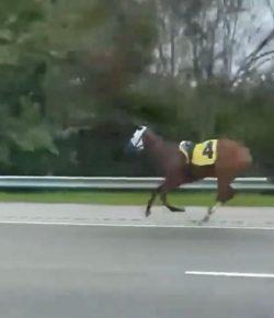 'Oh Crap' Monday: Highway Horse