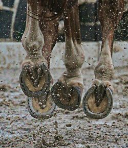 Moisture and Your Horse's Hooves, by Kentucky Performance Products
