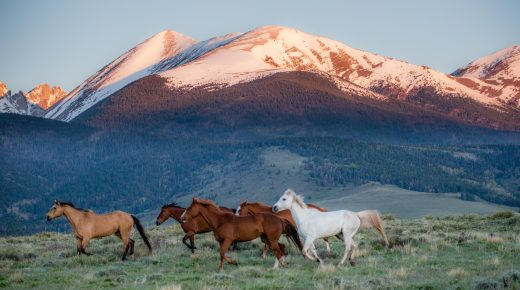 Wild Horse Welfare Advocates Call for Congressional Oversight on Roundup Program