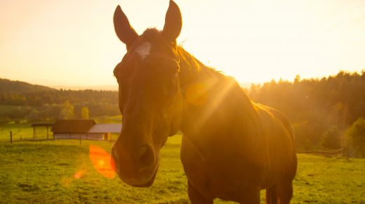 US Senators Reintroduce Bill to Ban Horse Slaughter