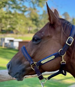 SmartPak Monday Morning Feed: Soft Padded Leather Halter Review