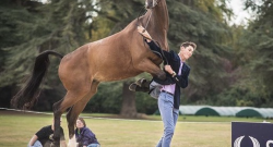 'Oh Crap' Monday: Trot up Gone Wrong