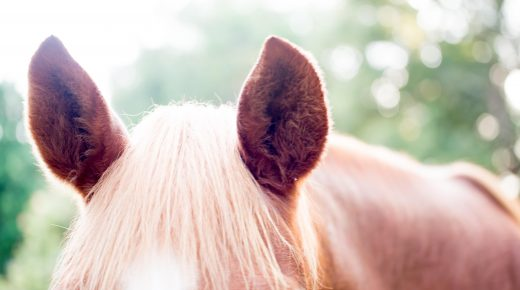 Testing a Horse's Hearing, Presented by Kentucky Performance Products