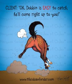 The Idea of Order: On This Week's Edition of 'How Your Horse Makes a Liar Out of You'…