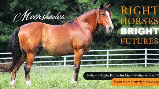 Right Horses, Bright Futures
